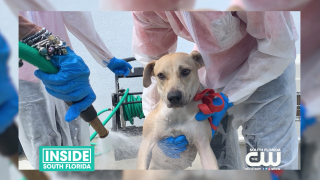 Humane Society of Greater Miami takes in Rescued Hurricane Dorian pets