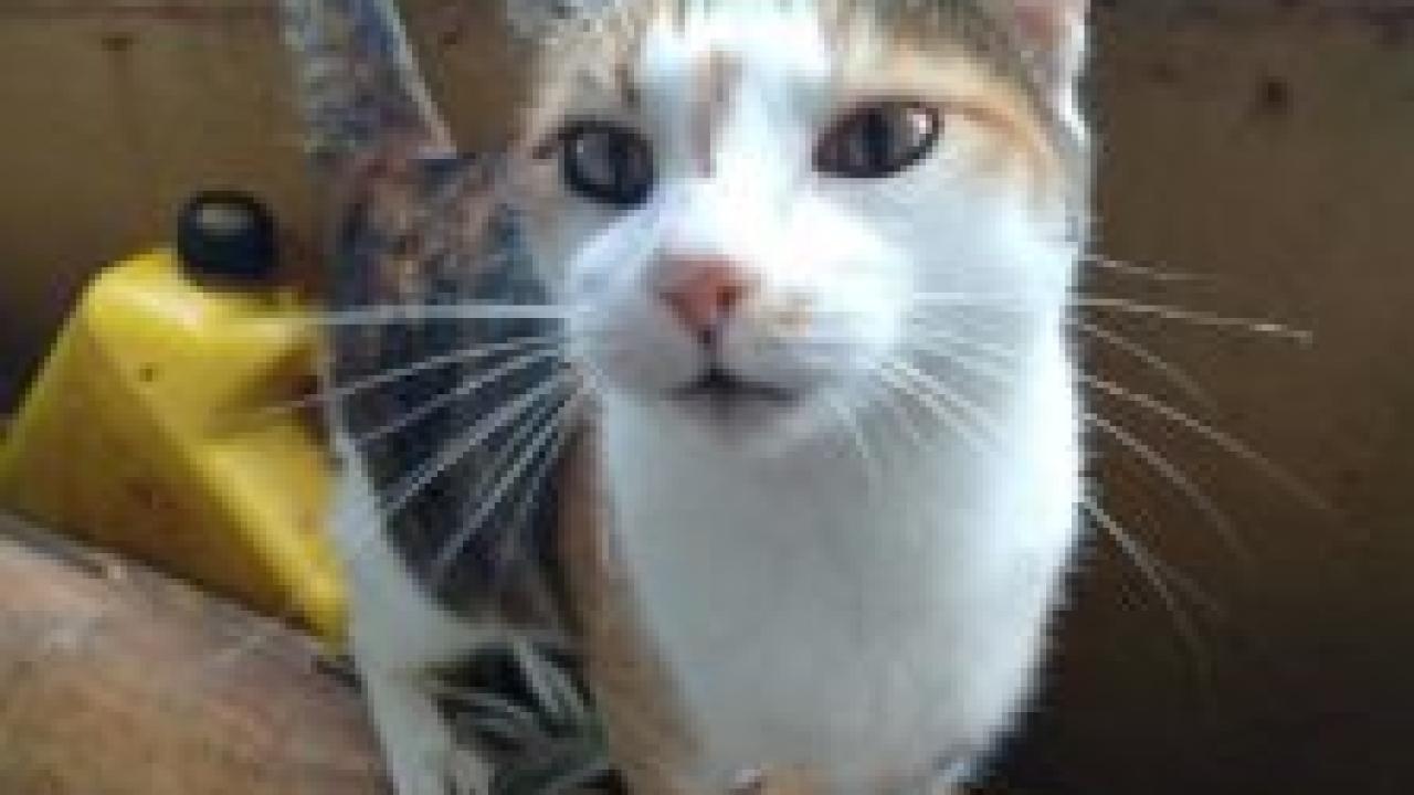 CAT SPCA1.PNG