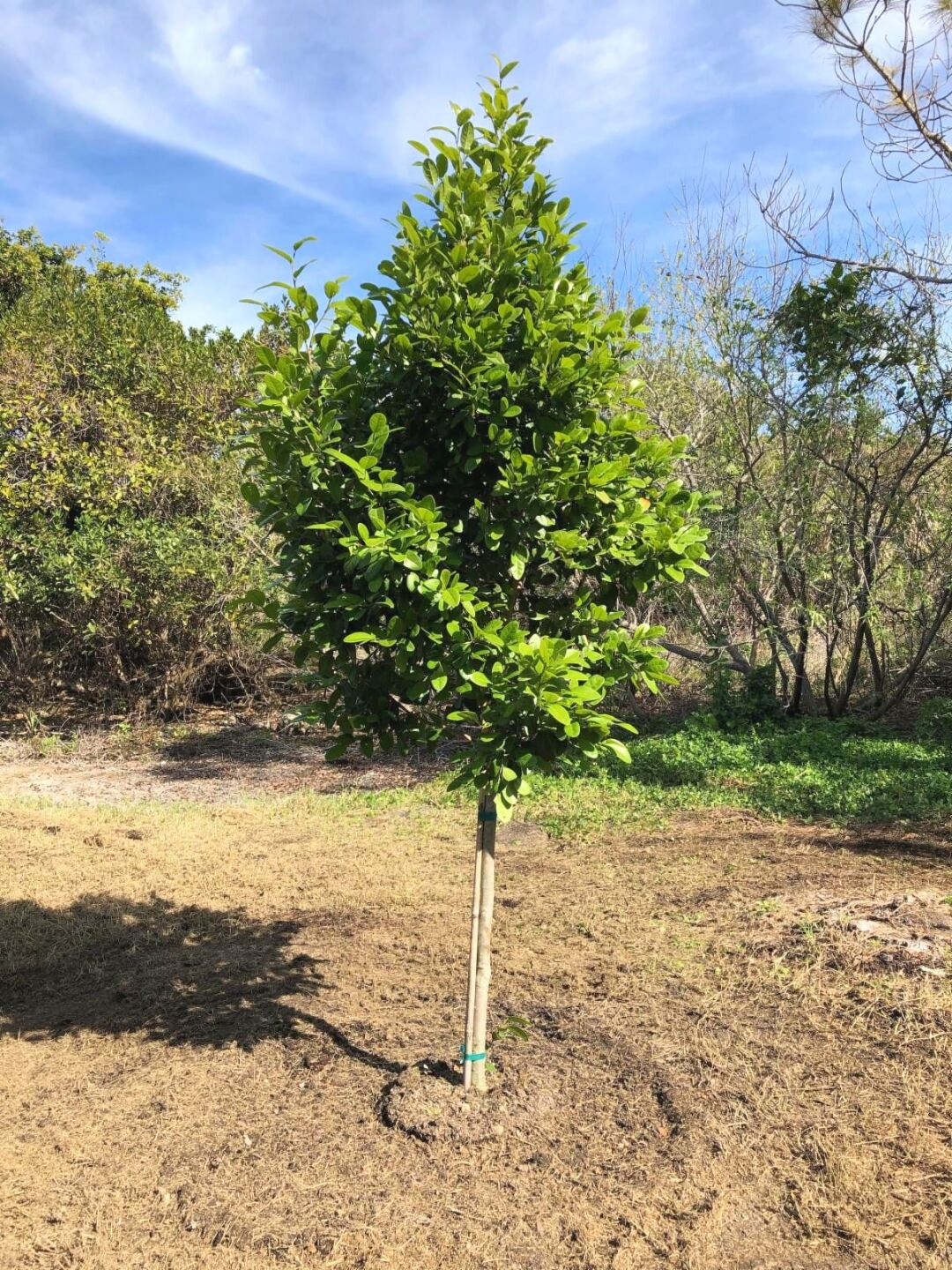 """""""The first tree she planted in our yard on Buttonwood Lane in 1985 was a pigeon plum. That same tree today is vital, strong and has many different native trees, shrubs and plants alongside of it that Dee planted and loved throughout the years,"""" Luc Century"""