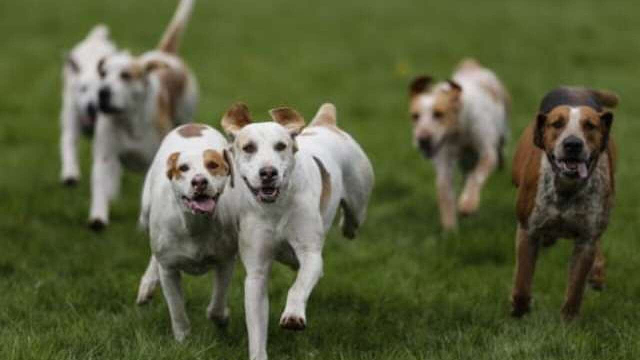 California divorce courts go to dogs as pets gain custody status