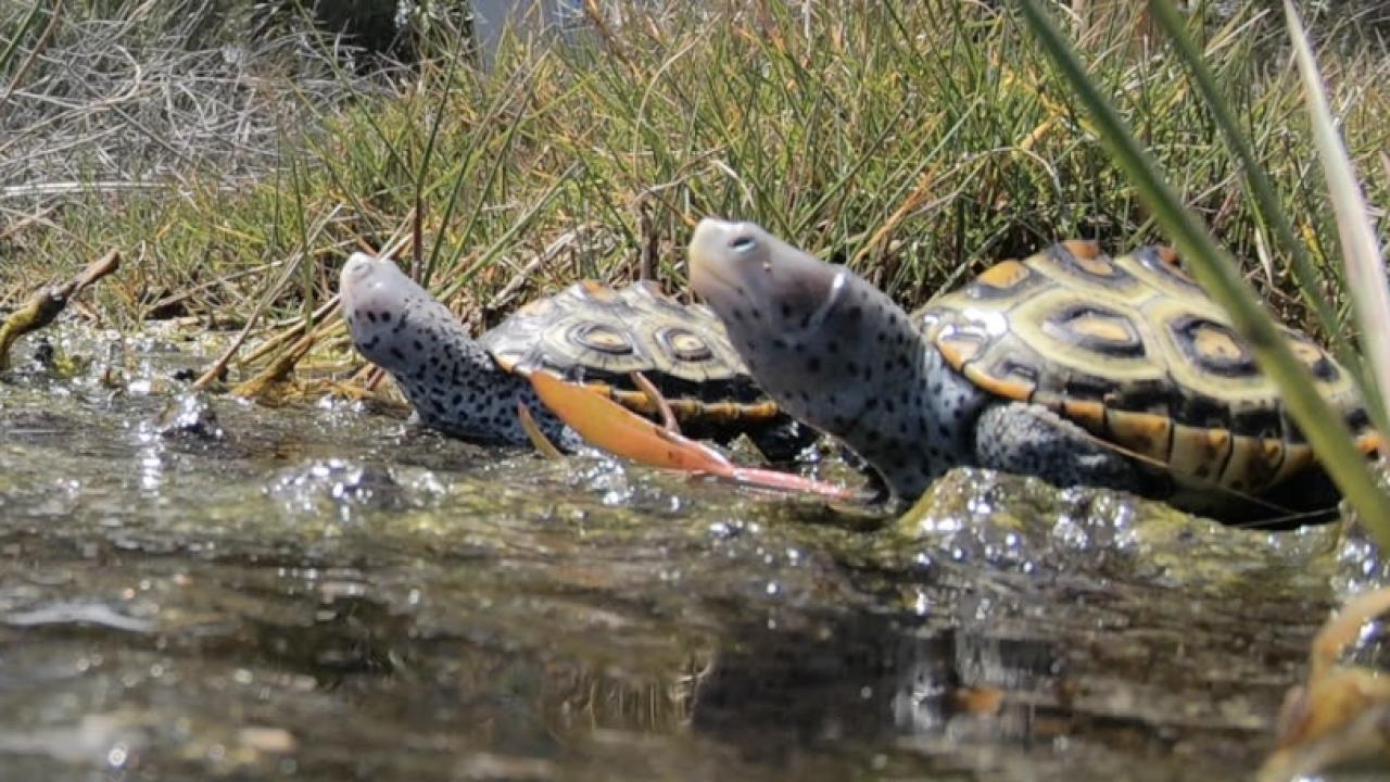 turtle hatchlings 4