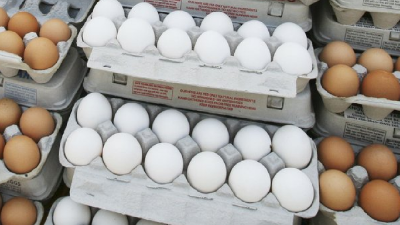 Eggs_file.PNG