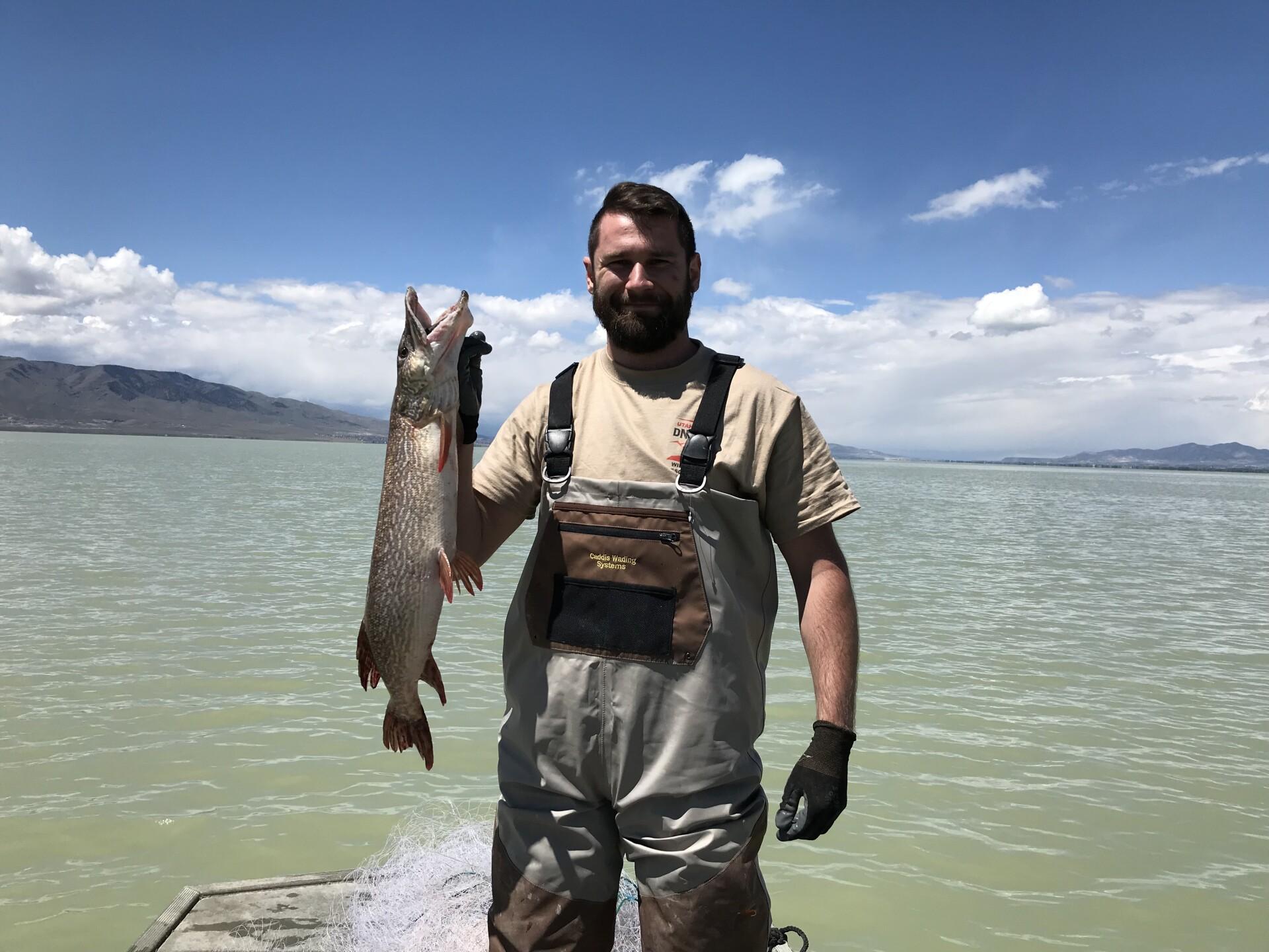 Adult Northern Pike Utah Lake May2018.JPG