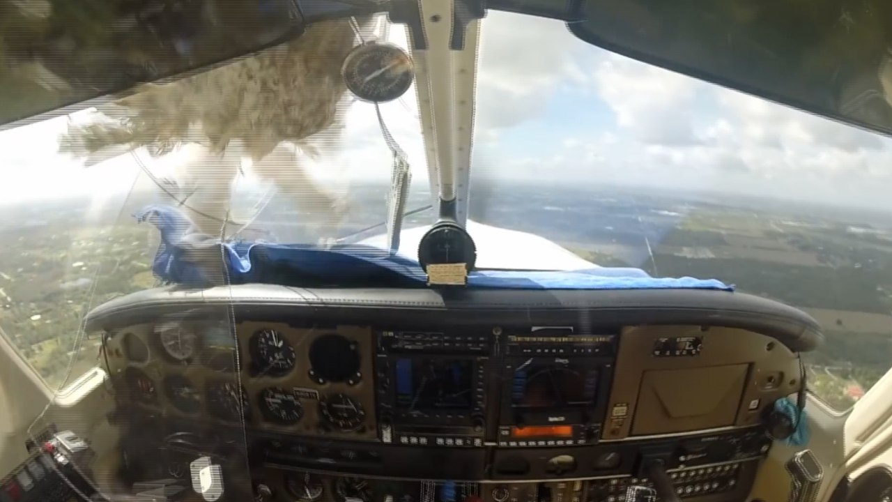 Pilot describes moment bird crashed through windshield as reported bird strikes at record high