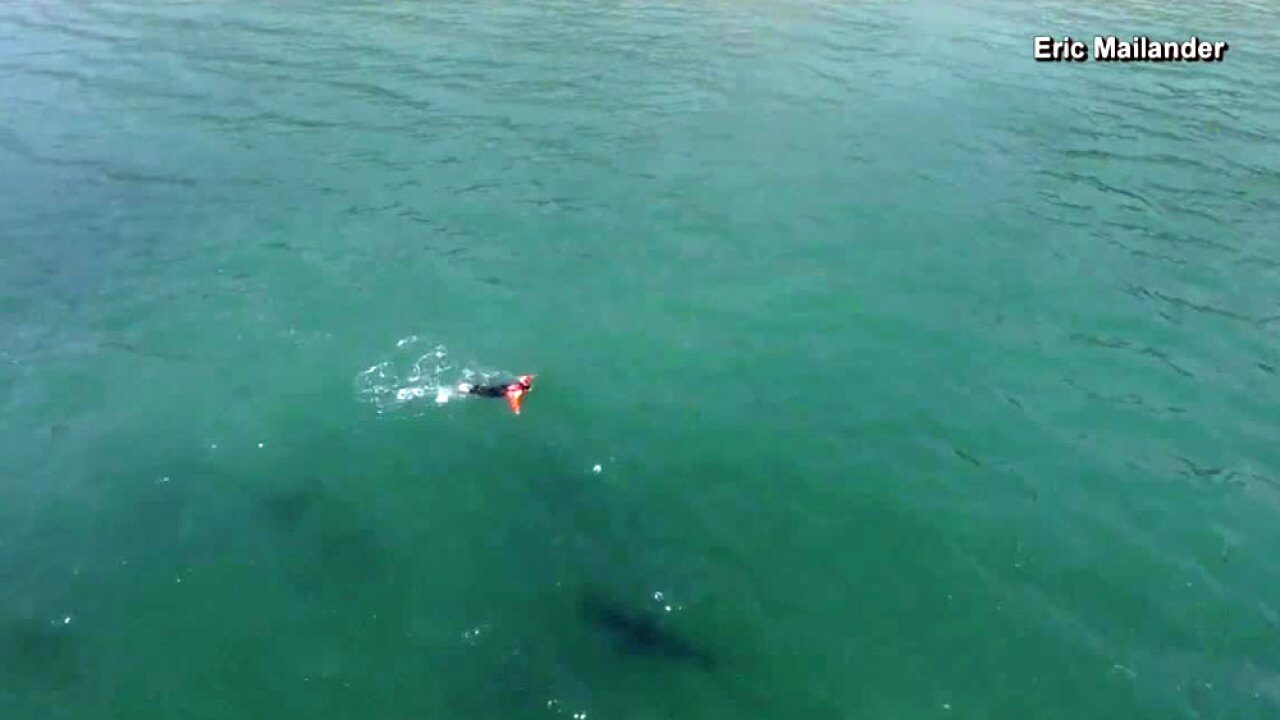 Video records swimmer's close encounter with a shark