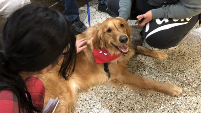 Therapy dogs of Sheboygan 911 dispatch [PHOTOS]