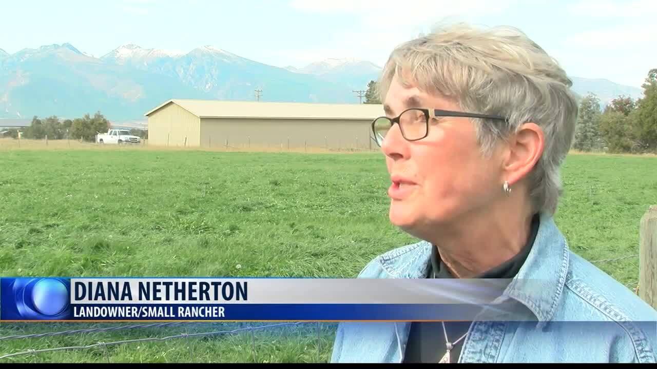 Stevensville landowner shares concerns after 14 sheep killed by mountain lion