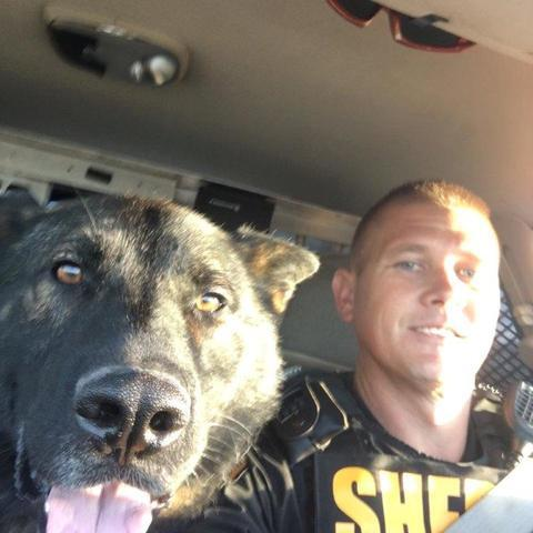 PHOTOS   K-9 Officers who protect and serve the Tampa Bay area