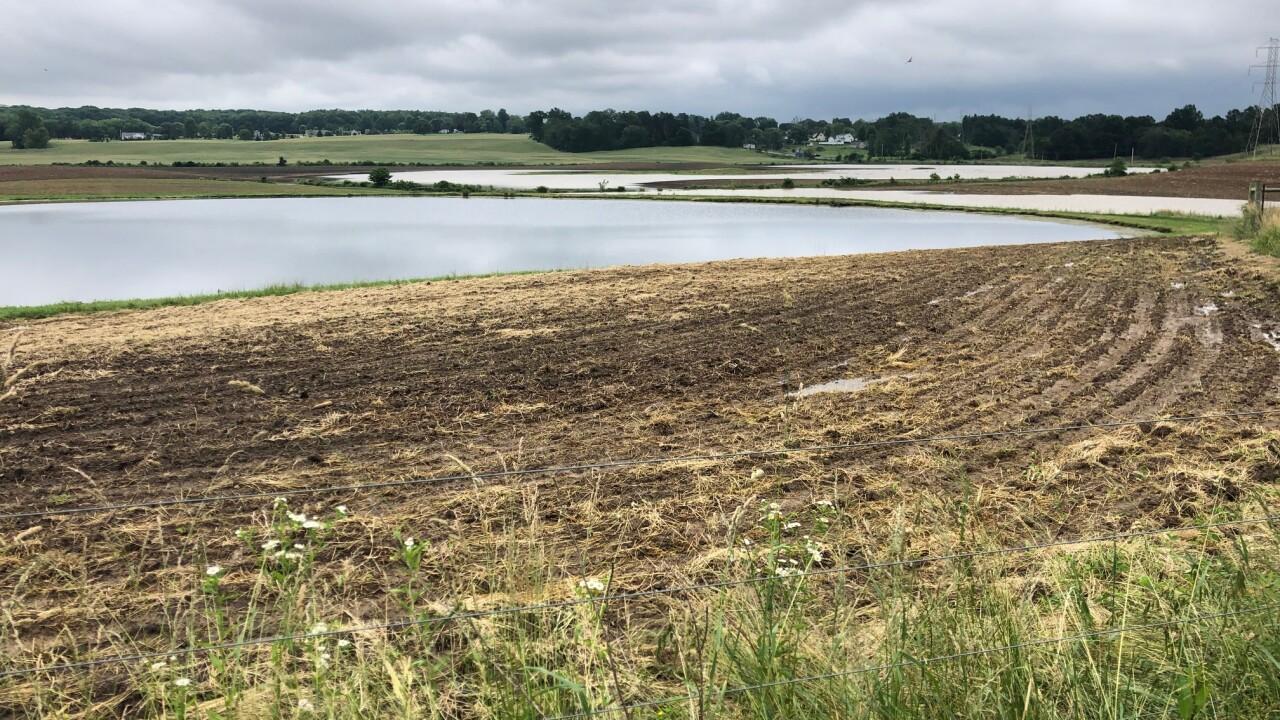 flooded fields 2