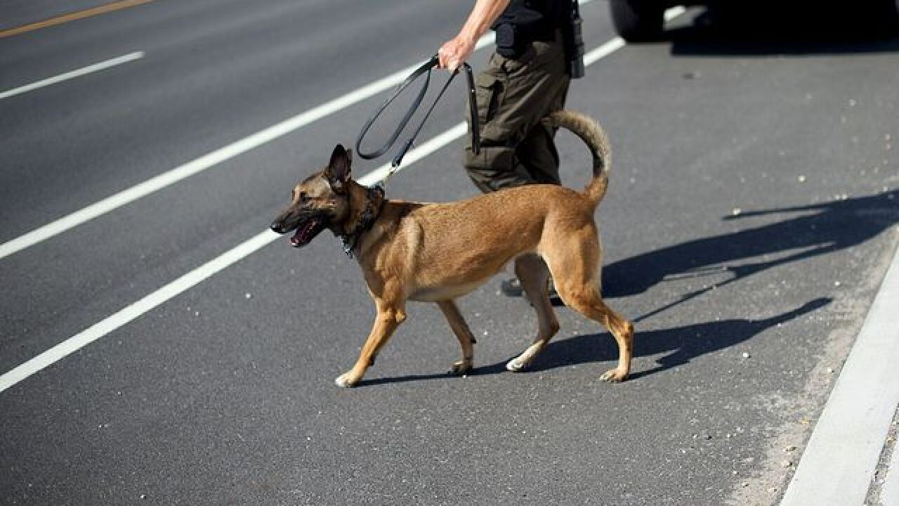 Colorado Supreme Court to review appeals court's decision on drug dogs, pot and police searches
