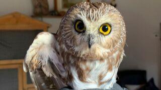Rockefeller Center owl.jpg