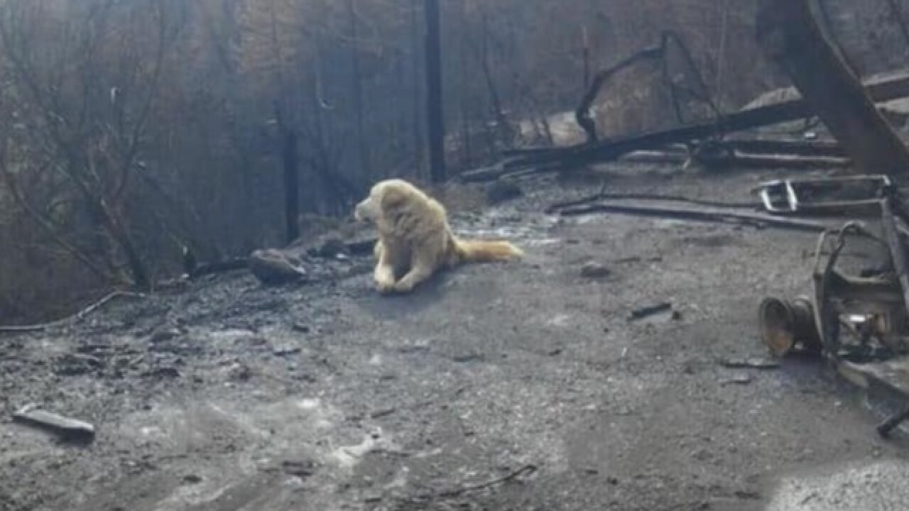 Pet owner returns home from Camp Fire evacuation, finds dog waiting for her