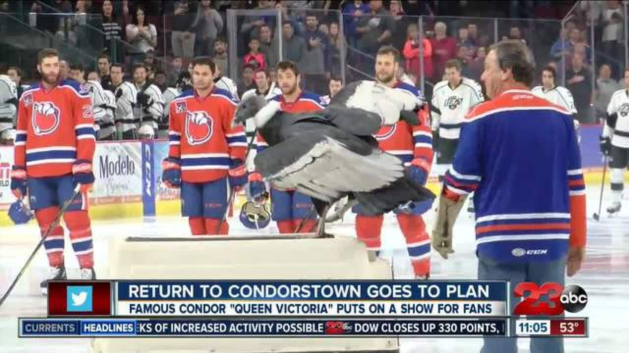 Return to Condorstown goes to plan for condor