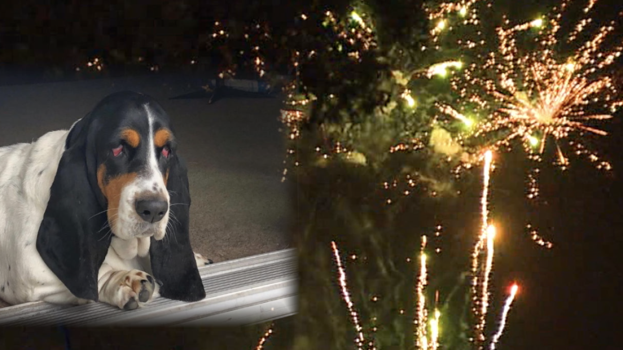 firework safety-pets.png