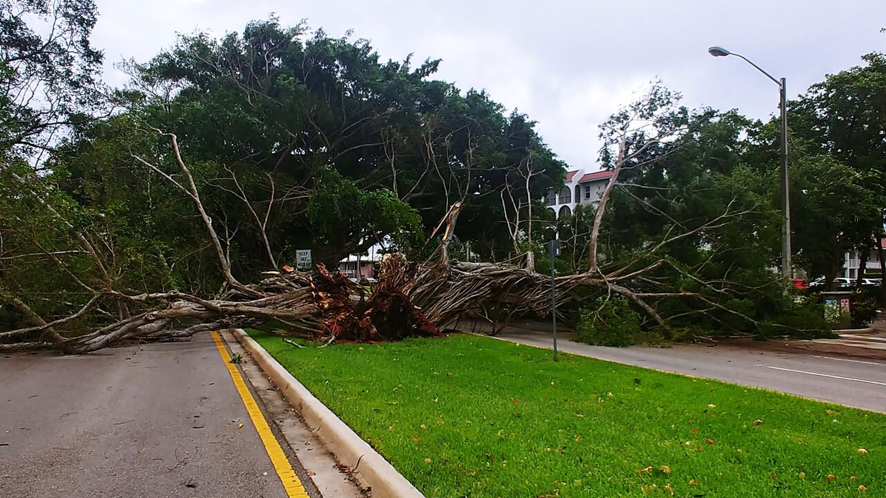 Downed trees in Boca Raton on April 11, 2021