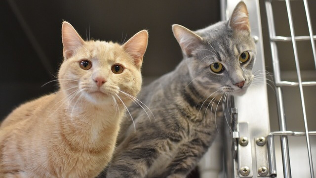 PHOTOS: Animals abandoned at Humane Society of Indianapolis