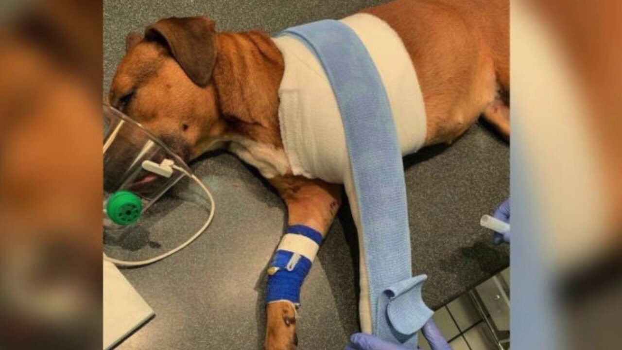 Owner wonders who shot his dog playing in the yard on Christmas Eve – andwhy