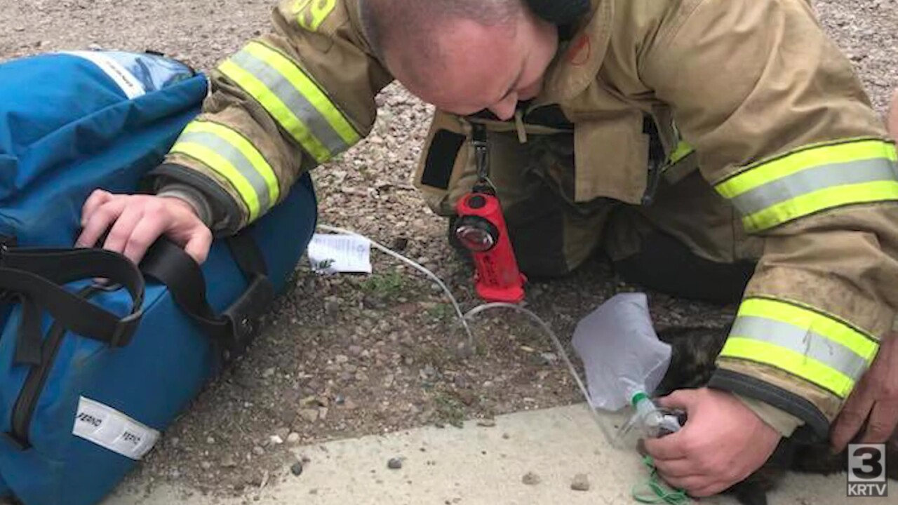 Oxygen masks help pets recover from smoke inhalation