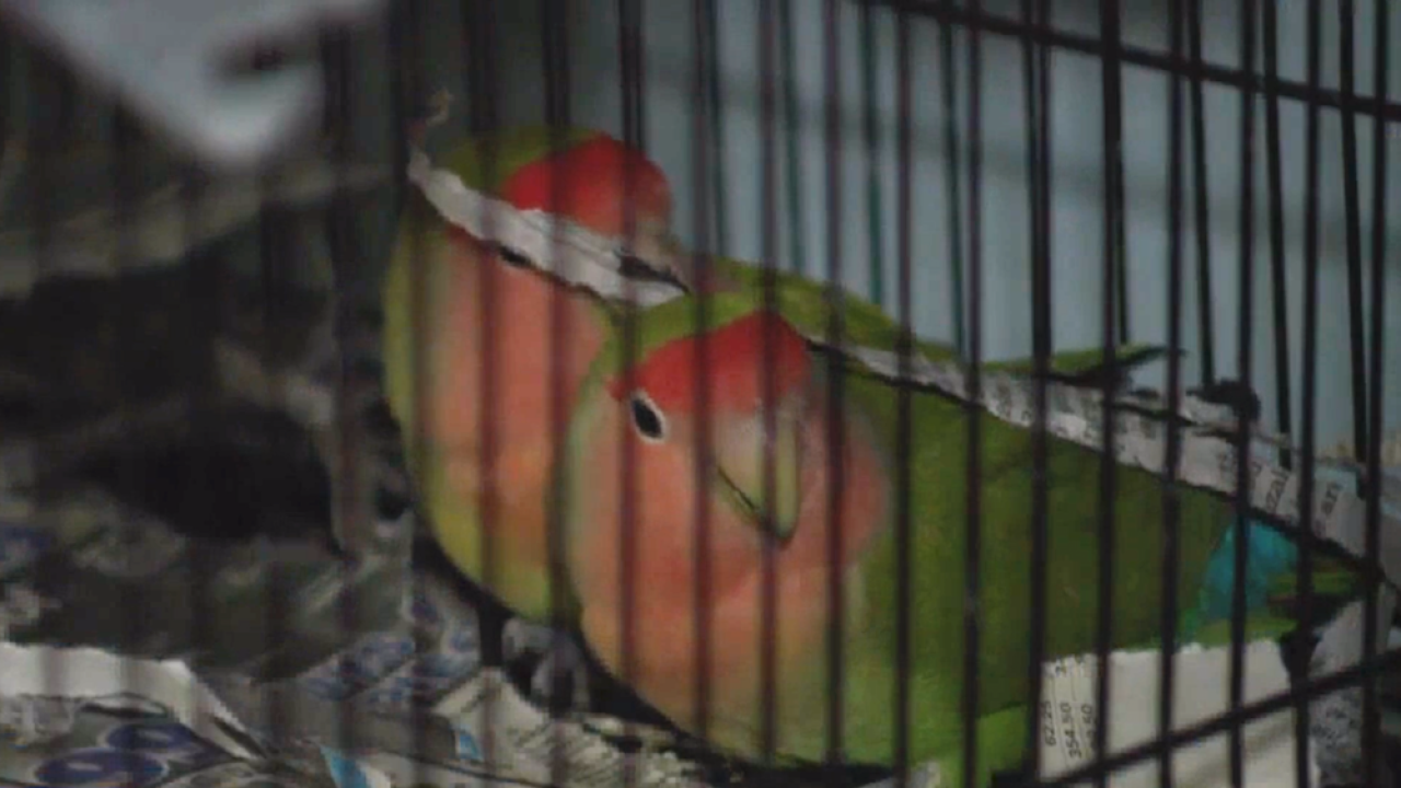 More than 600 lovebirds removed from Phoenix-area home
