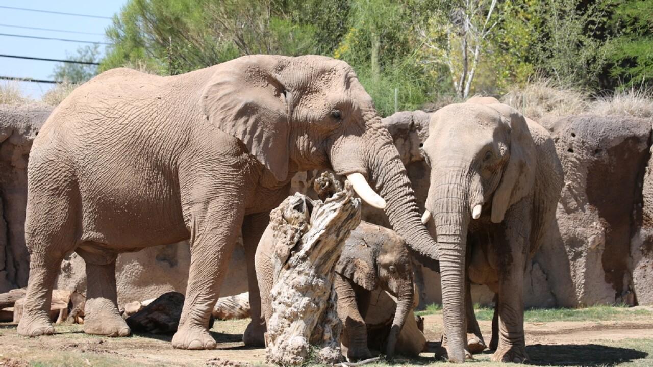 Reid Park elephants.jpg