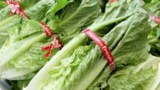 67 E. coli infections across 19 states are linked to romaine lettuce, CDC says