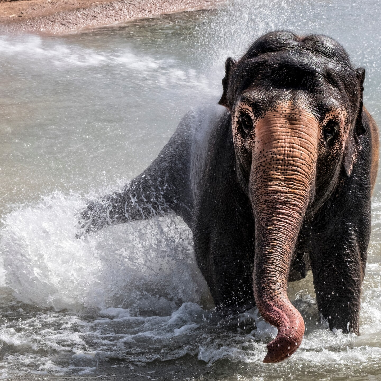 Reba Asian Elephant Phoenix Zoo - Handouts16.jpg