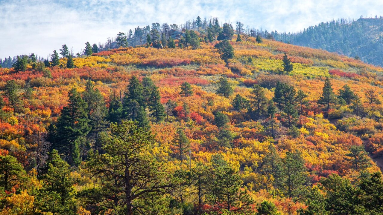 Fall colors near Woodland Park