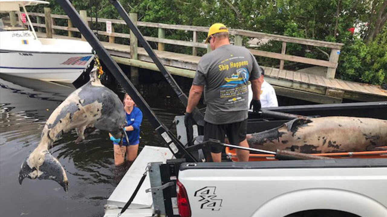 9 bottlenose dolphins found dead in Sarasota County, Florida, in 36 hours