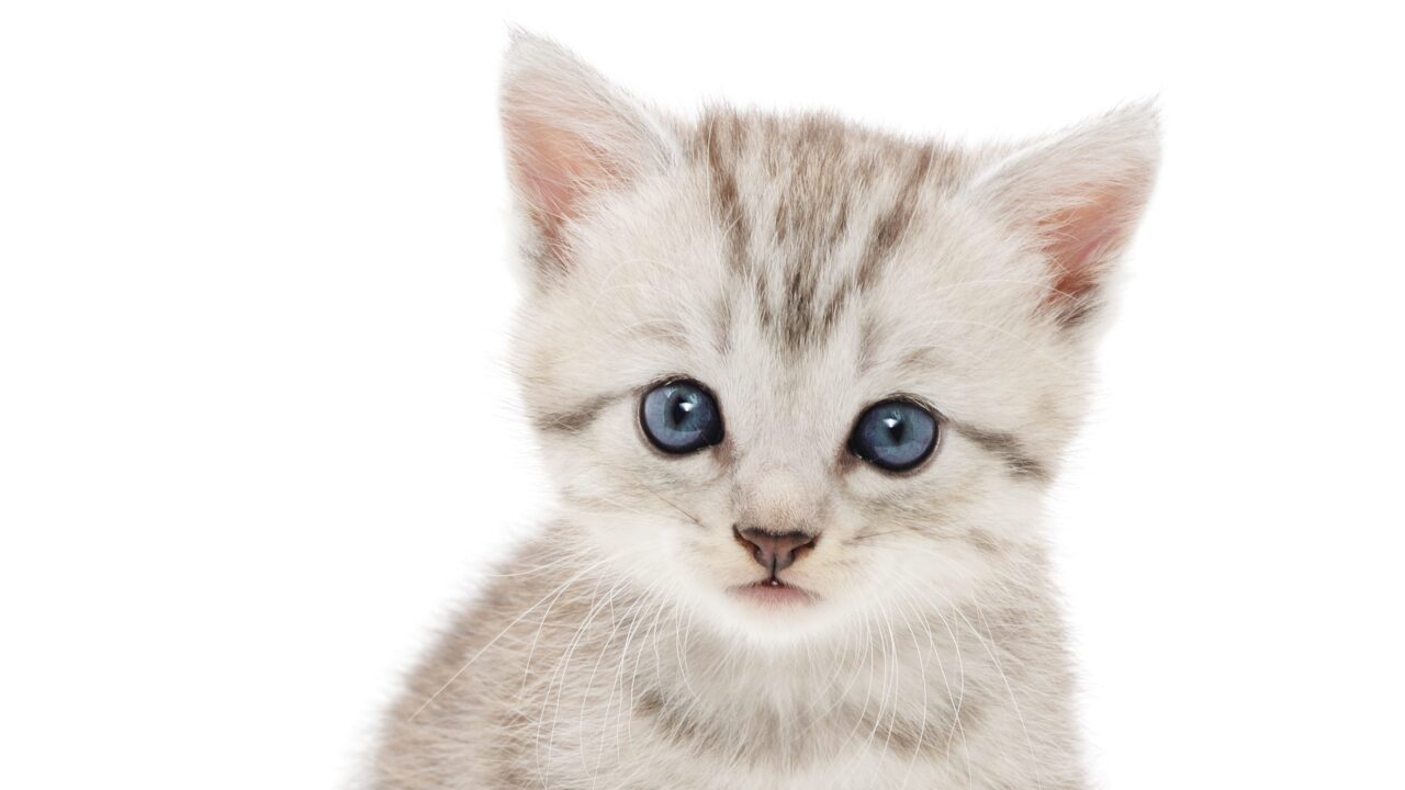 Police looking for driver who killed 2kittens