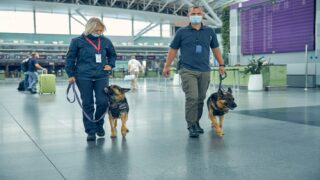 COVID-sniffing Dogs Are Being Used To Screen Passengers At Airports