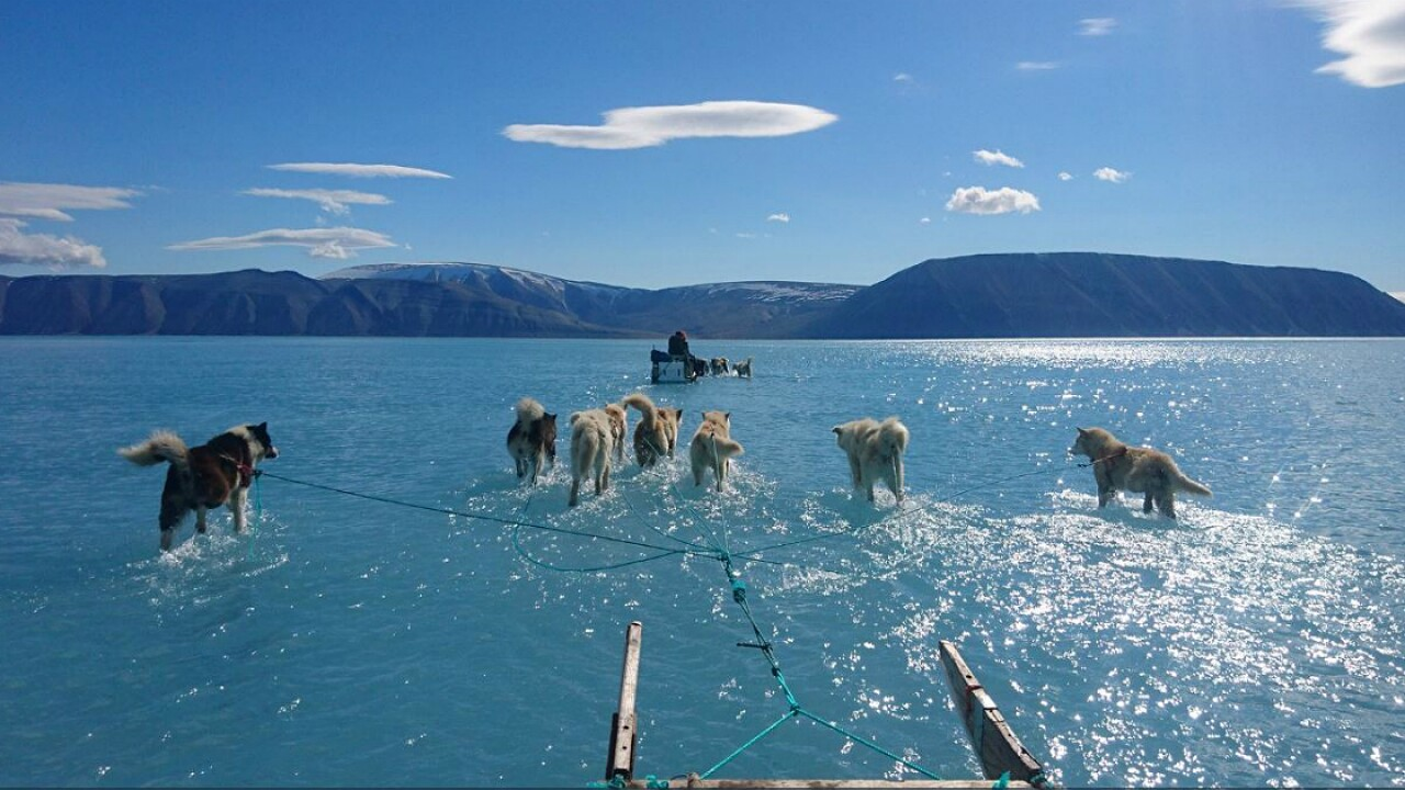 Photo of sled dogs walking through water shows reality of Greenland's melting ice sheet