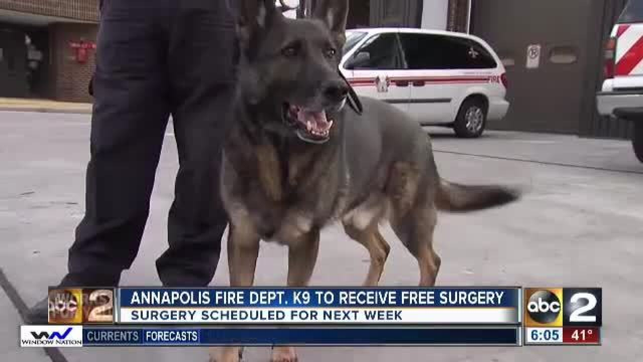 Vet offers to perform surgery on injured K9 for free