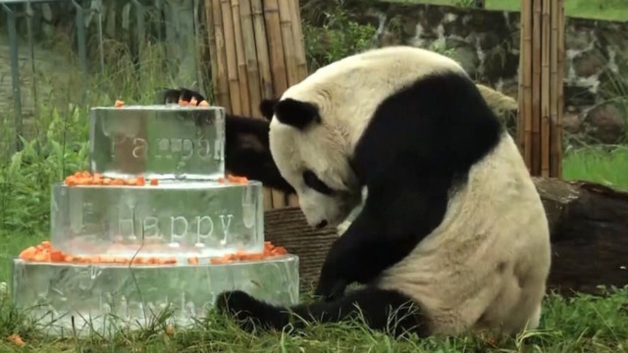 Pan Pan, world's oldest male panda, dies in China
