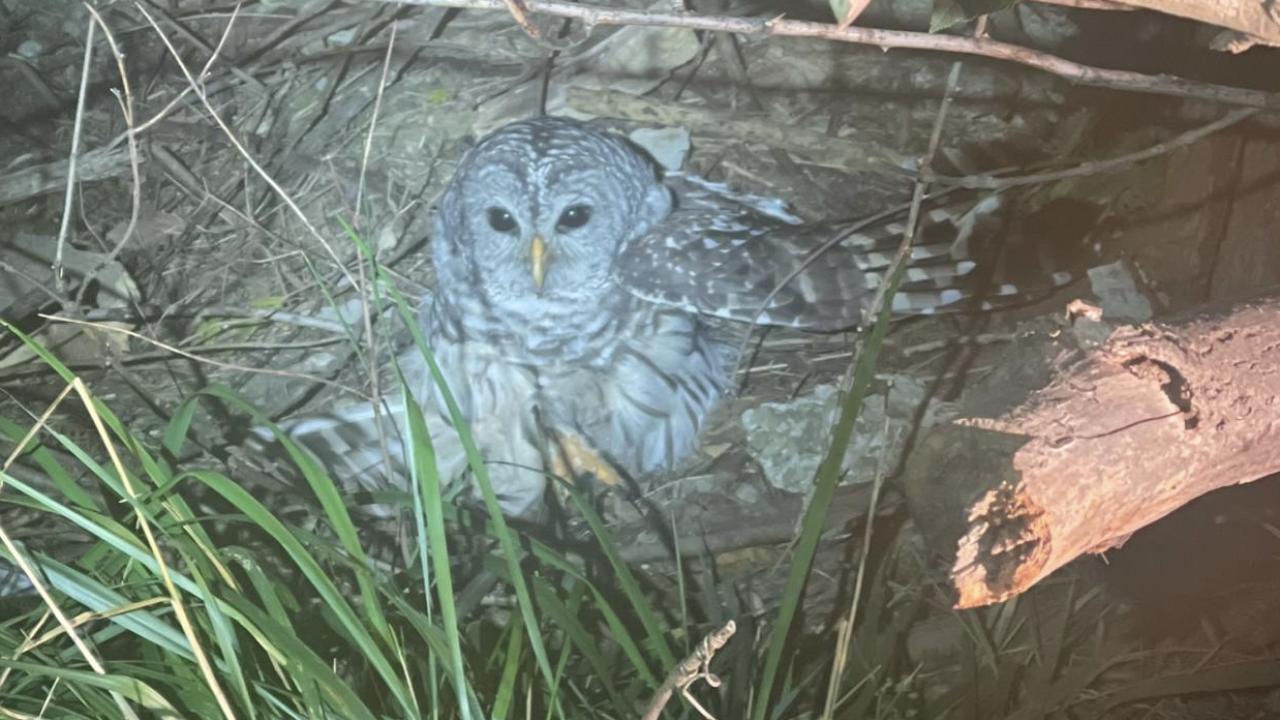 Berrien County sheriff's deputy rescues owl