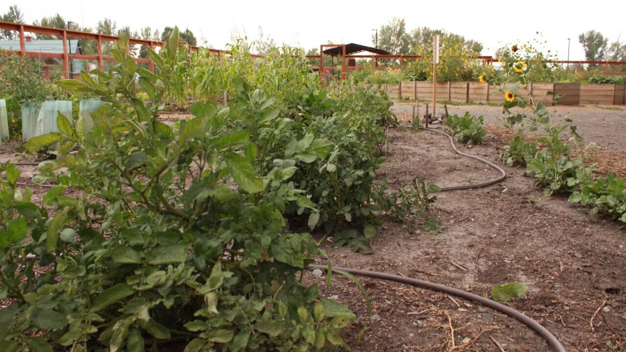 ancestral garden 3.jpeg