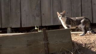 Lawsuit filed over SD Humane Society's handling of stray cats