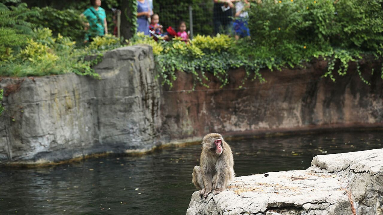 Today is National Zoo Lovers Day: They have been in the U.S. since 1874