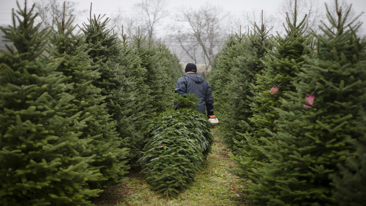 Christmas Tree permits are now available