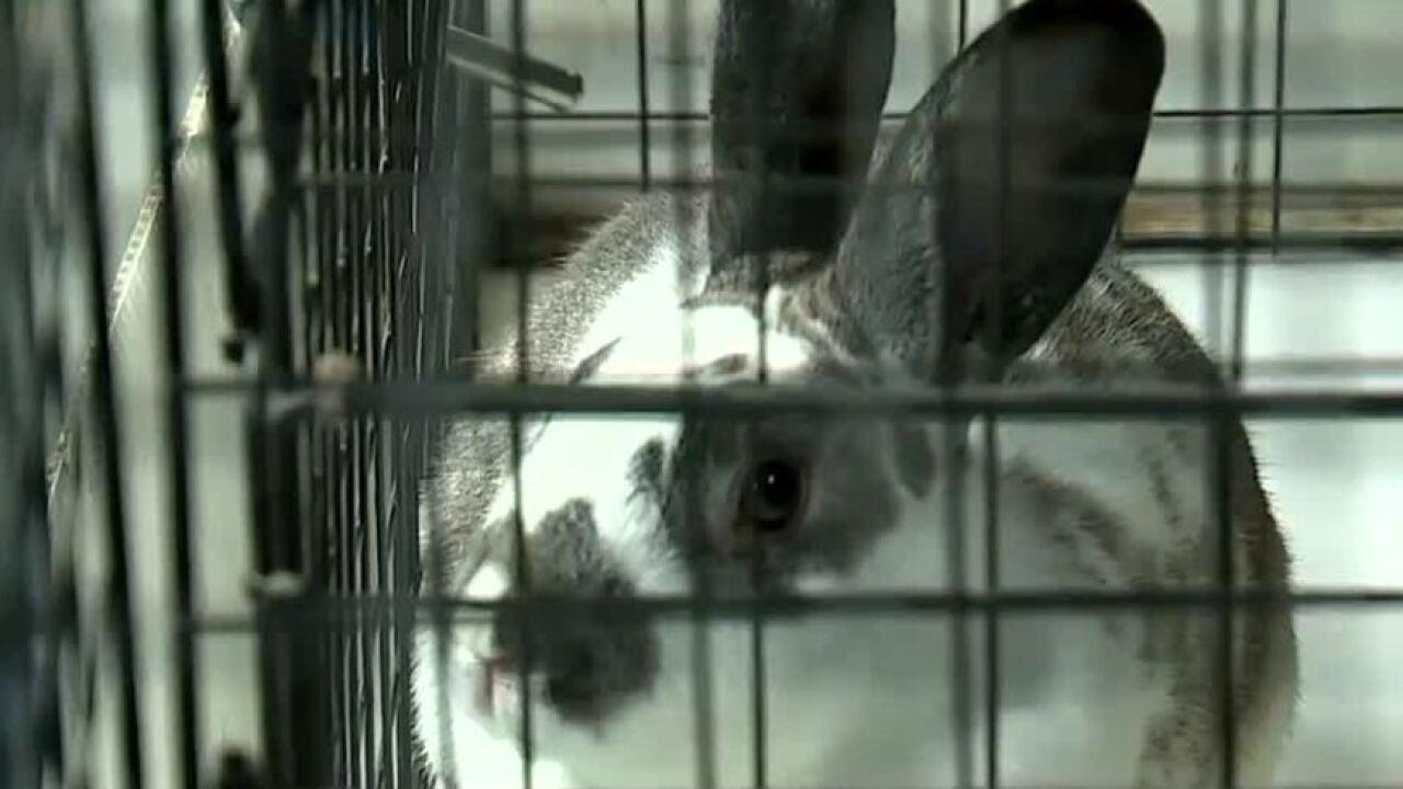 6.10 bunny.JPG