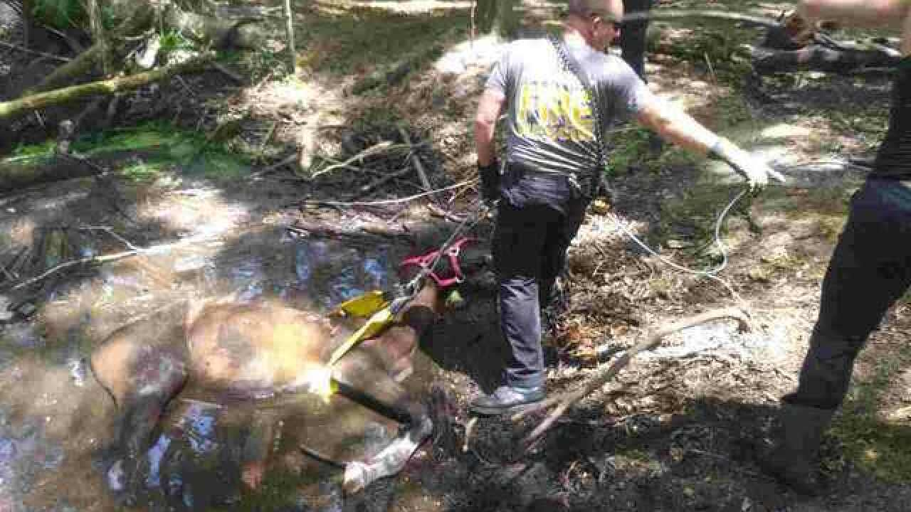 Crews rescue horse after it fell in a hole