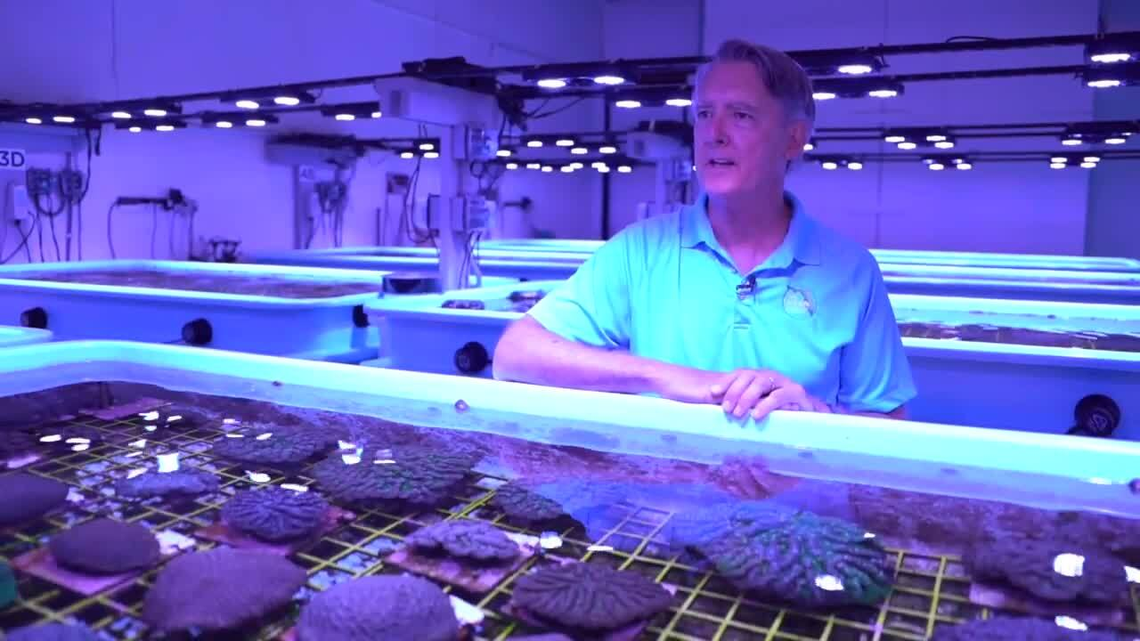 Andrew Walker speaks about Florida Coral Rescue Center