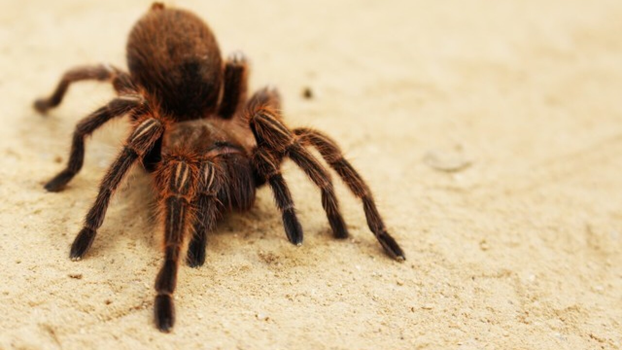 Spiders are still causing problems for some Toyota owners