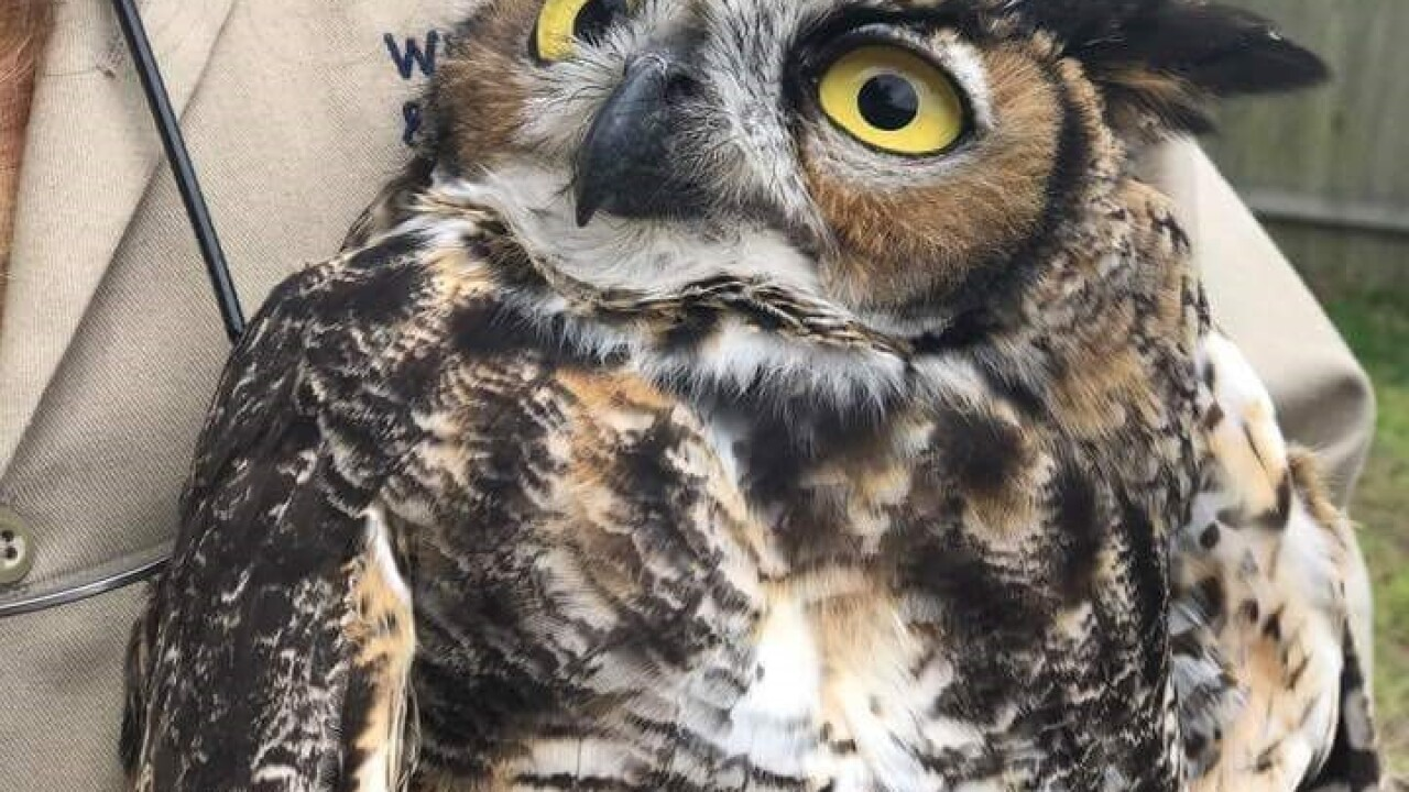 Local firefighters save injured owl in VirginiaBeach