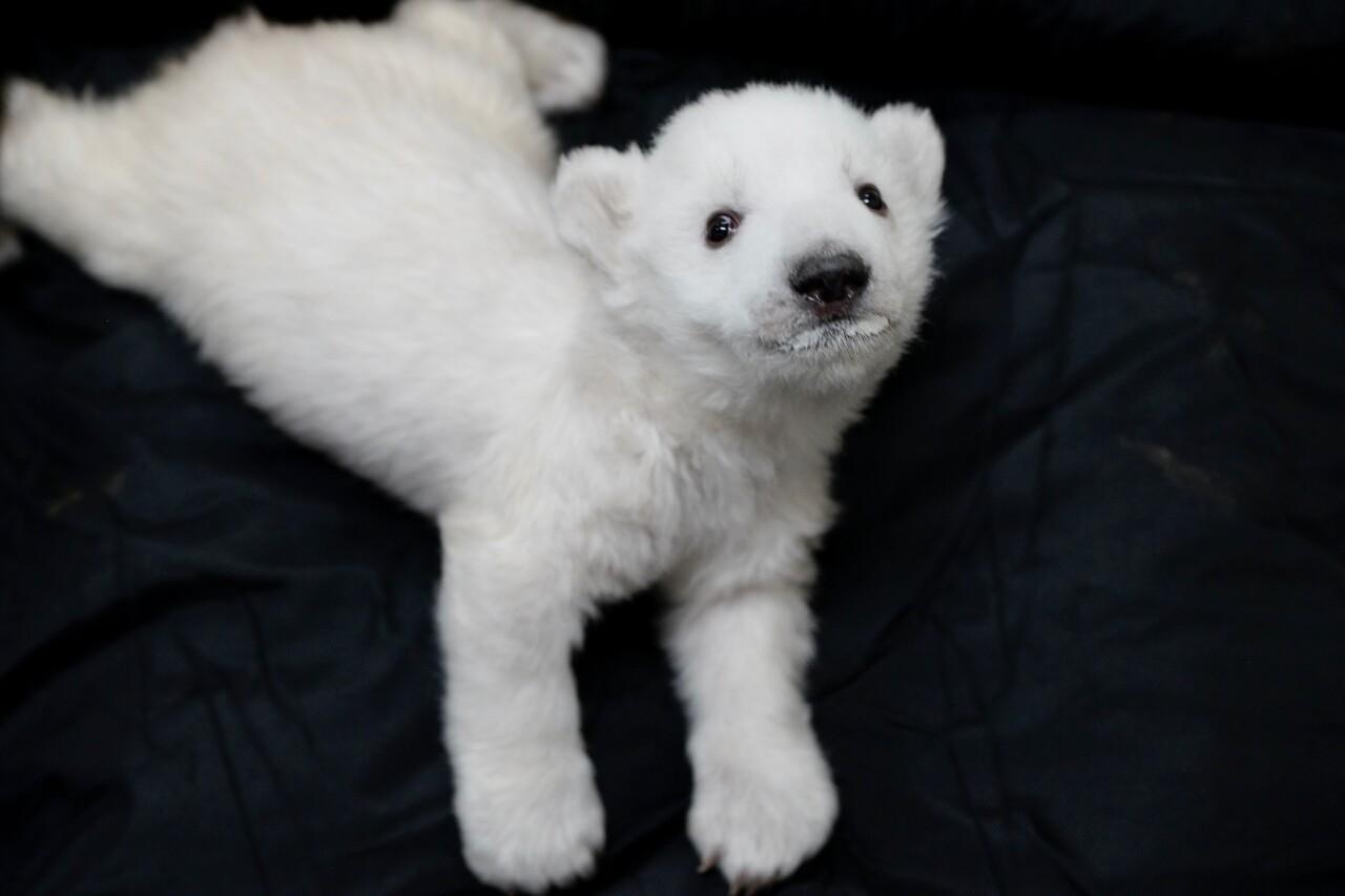 Polar Bear Cub 4.jpeg